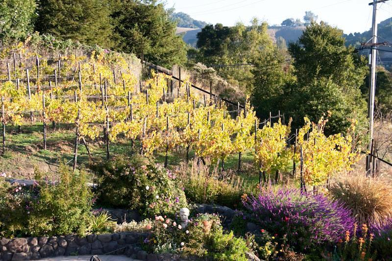 Areton Vineyard