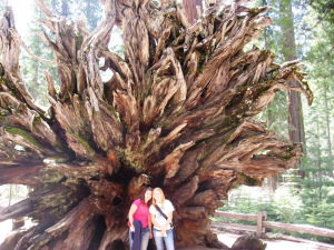 Yosemite Aimee Stein 09 3