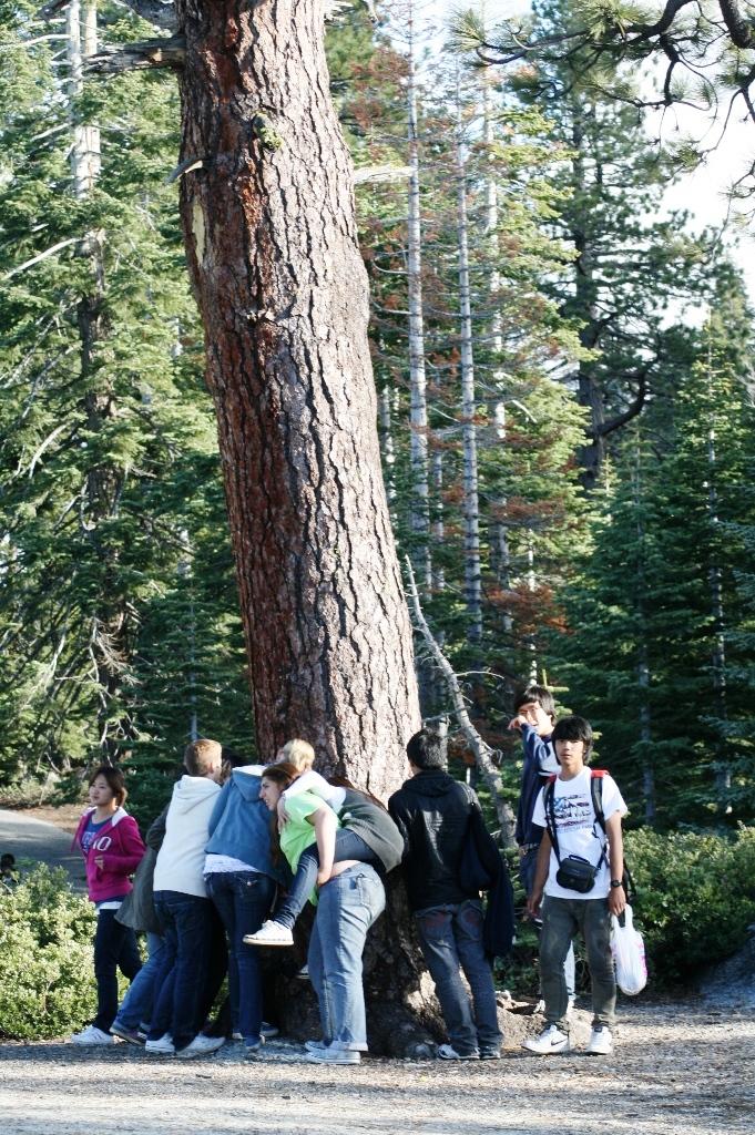 Yosemite Aimee Stein 09 9