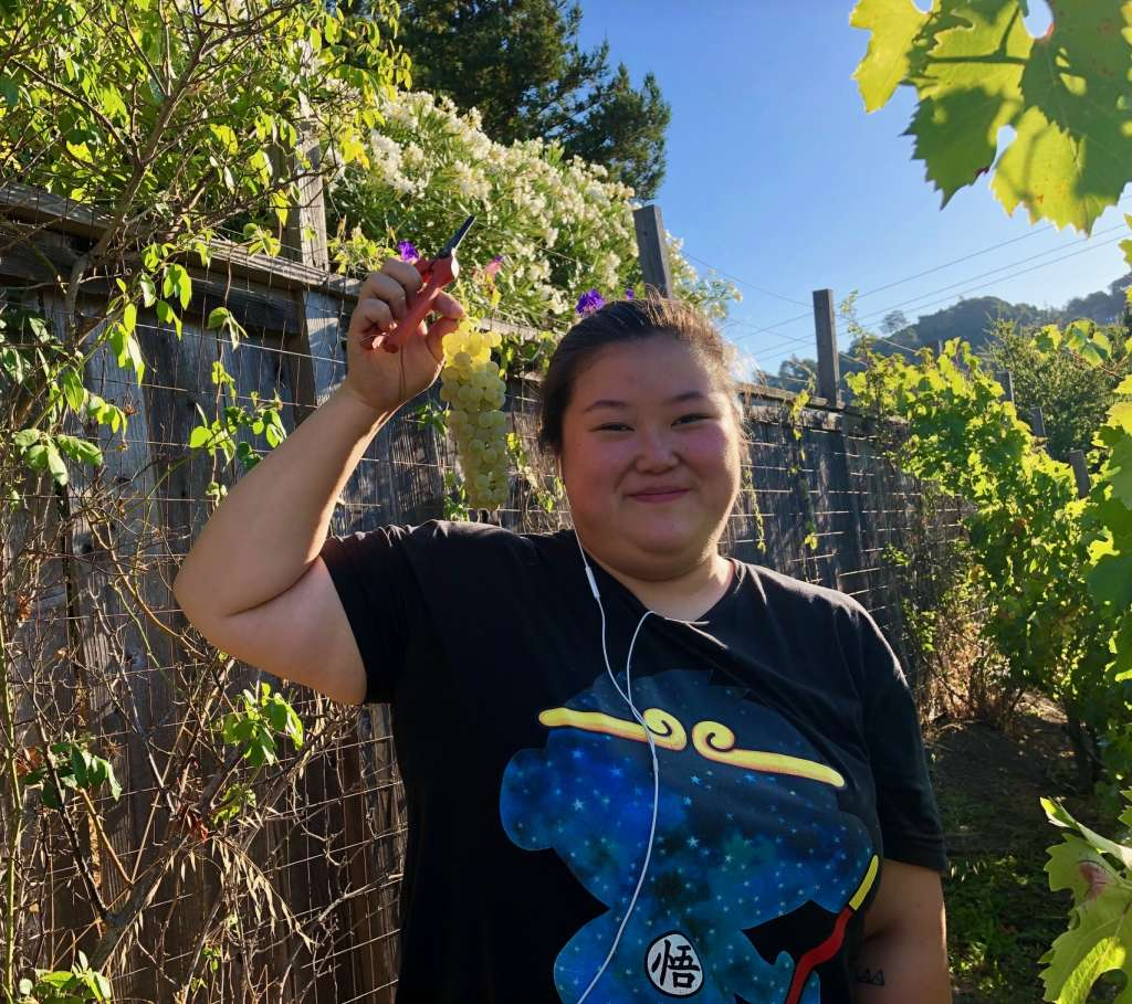 CHI Intern Helps with Grape Harvest 1